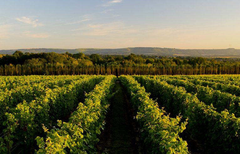 England's Hidden Vineyards: A Visit to Nyetimber